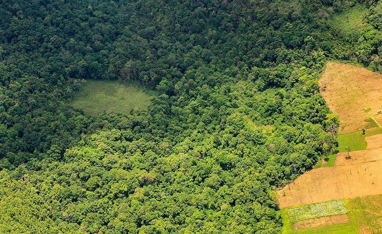 Salvar a Amazônia? Não se você ainda come carne…