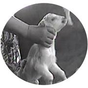 http://www.mercyforanimals.org/auction/video.aspx